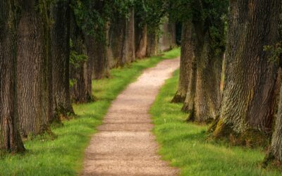 The Pathway of change